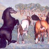 Cavalli in Maremma